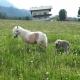 Pony Princess und Nachwuchs